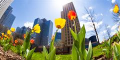 Spring tulips and skyline in Pittsburgh