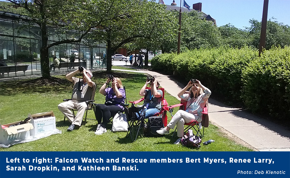 Falcon Watch and Rescue.jpg