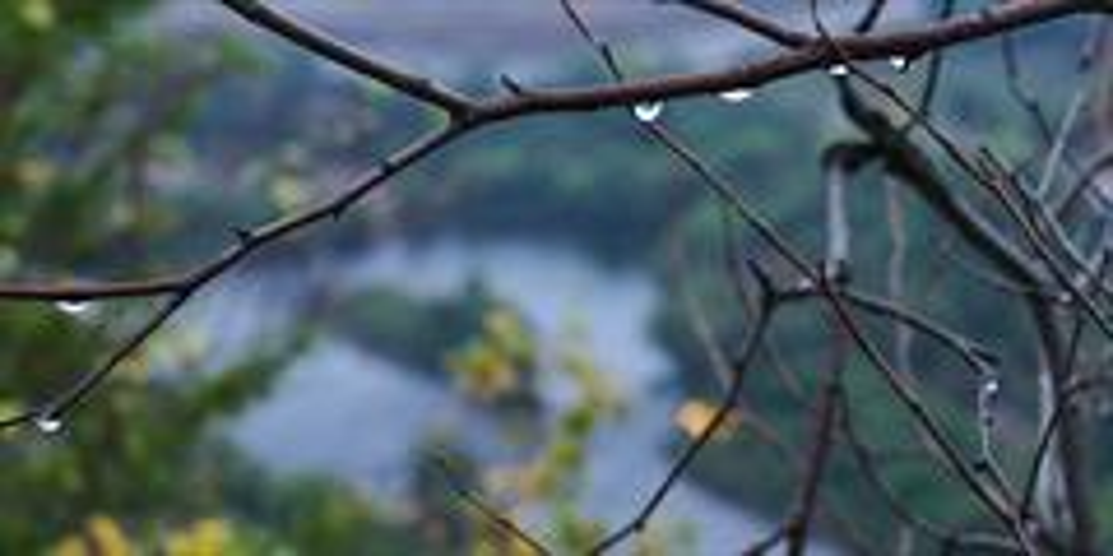 Raindrops on a branch over a Pennsylvania river