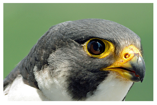 PA Falcon Cam
